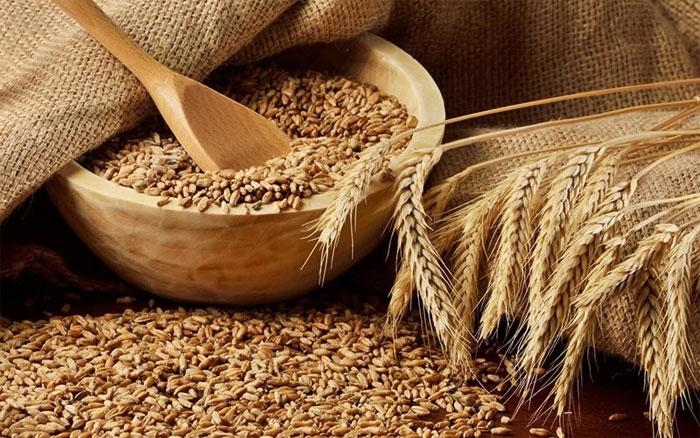 Роль пшеницы для агропромышленности и питания